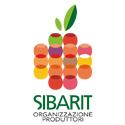 Consorzio Sibarit